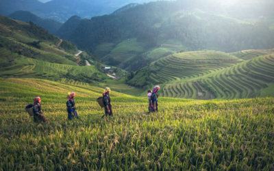 Four women waking through a field in the green hills of East Asia. The woman in front as a baby on her back, two of the other women have gathering baskets on their backs.